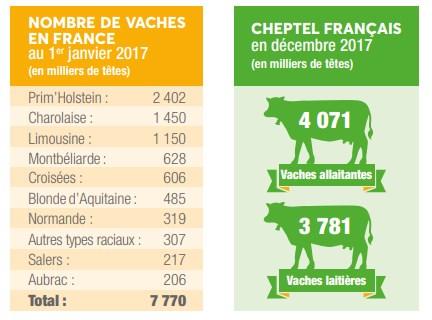 Chiffres 2017 vaches en France