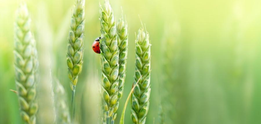 Table ronde agriculture bio SIMA 2019